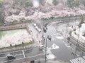 青森 弘前公園 追手門前  桜 サムネイル