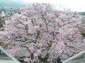 長野 飯田城址ライブカメラ  桜 サムネイル