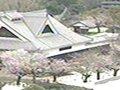 熊本城  桜 サムネイル