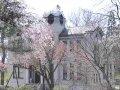 秋田 旧池田氏庭園  桜 サムネイル