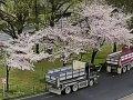 京都 東本願寺前ライブカメラ  桜 サムネイル